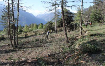 Wiederbewirtschaftung von Trockenstandorten in Zeneggen