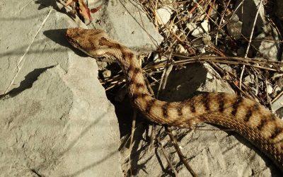 Schlangenbisse sind sehr selten