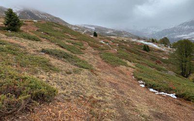 Pilotprojekt Mulchen von Zwergwacholder auf Alpweiden im Landschaftspark Binntal zur Förderung des Birkwildes