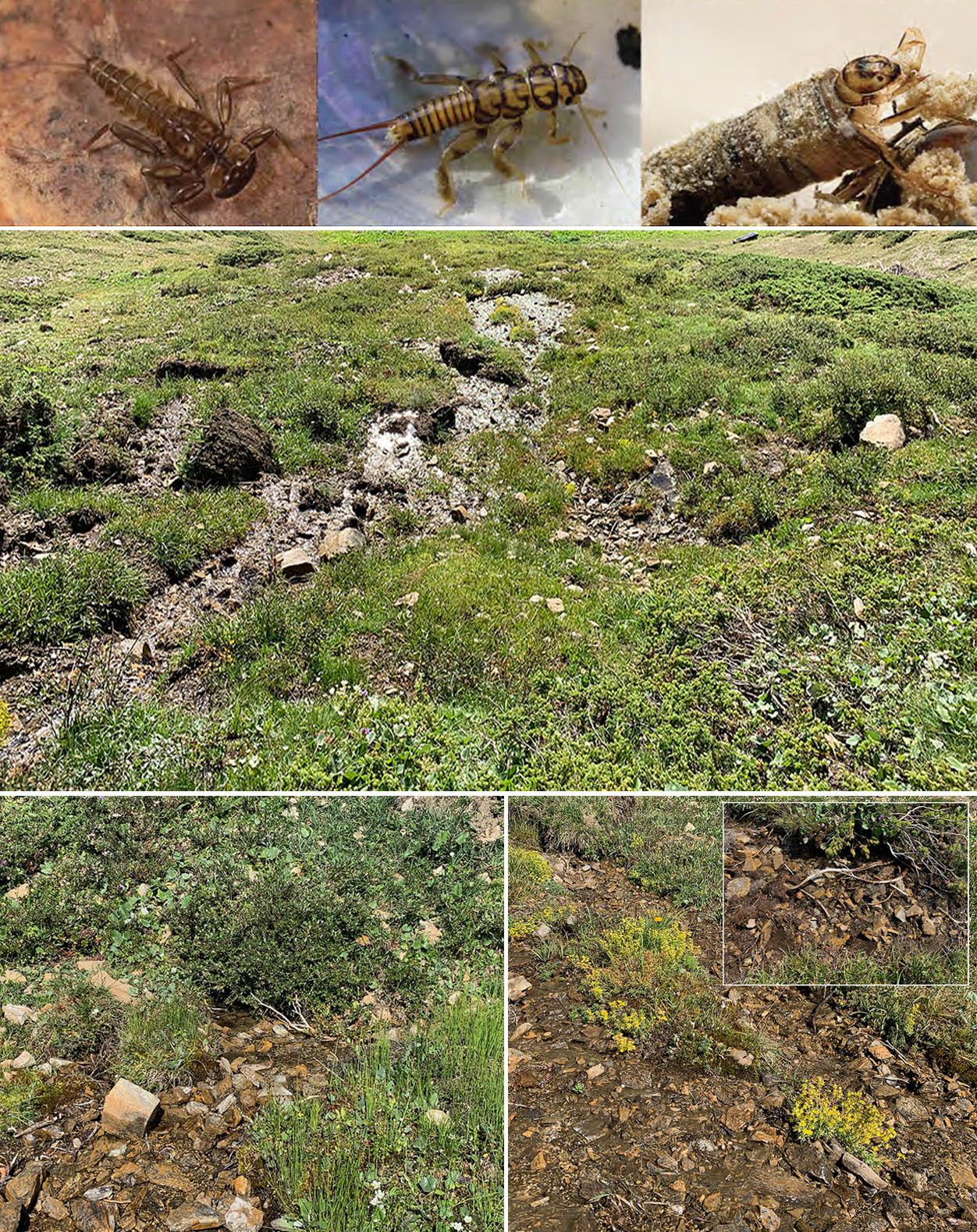Lebensraum Quelle und typische Arten
