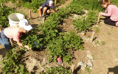 Schulgarten-Projekt mit dem Naturpark Pfyn-Finges